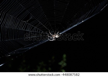Contrast light image of big brown garden spider in center of his web with small insect prey at night on black background - stock photo