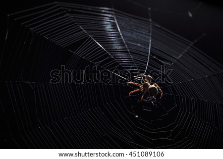 Contrast light image of big brown garden spider in center of his web with small insect prey at night on black background, horizontal view - stock photo