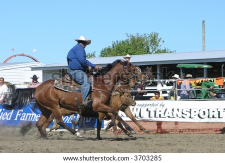 Controlling the Steer - stock photo