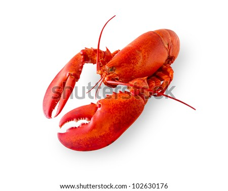 Cooked and boiled red lobster isolated on a white background with added shade. Clipping path in the file. - stock photo