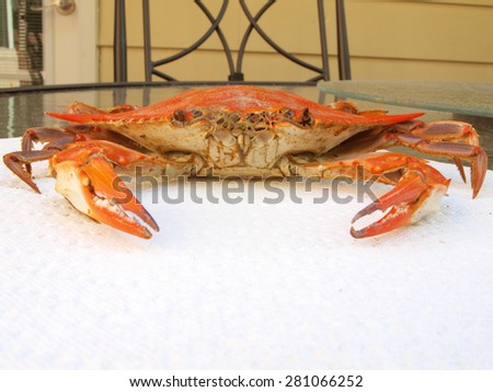 cooked blue crab from the Chesapeake Bay of Maryland on a paper towel  - stock photo