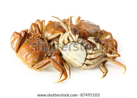 Cooked crab isolated in white background
