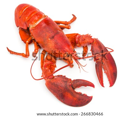 Cooked lobster on white background - stock photo