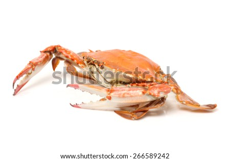 Cooked whole  crab - stock photo