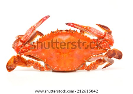 Cooked whole crab on the shell and isolated on white background  - stock photo
