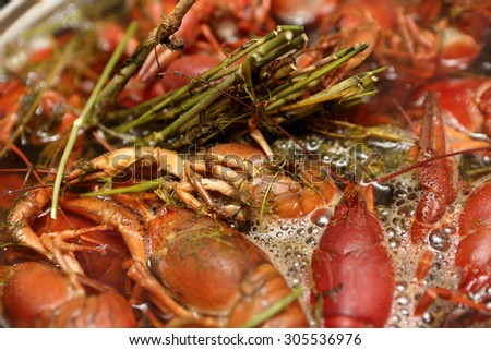 Cooking of crayfish with dill at a kitchin - stock photo