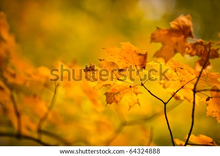 Cool Colors from Fall Leaves and Foliage - stock photo