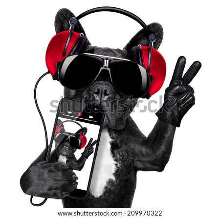 cool dj dog listening to music with earphones and music player with peace or victory fingers - stock photo