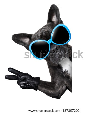cool dog behind white blank banner or placard with peace and victory fingers - stock photo