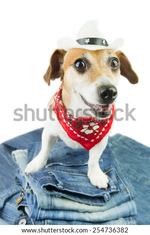 Cool dog demonstrates coolest designer jeans. Cowboy hat and red bandana - stock photo