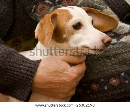 cool dog sitting near old man - stock photo