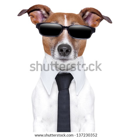cool dog with black glasses and a tie