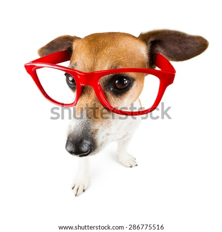 Cool dog with red glasses