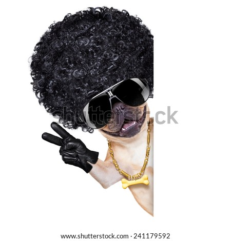 cool gangster french bulldog dog with peace and victory fingers, isolated on white background - stock photo