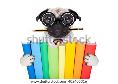 cool  school pug dog, with stack of books and pencil in mouth ,isolated on white background - stock photo