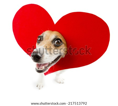 Cool small dog with a heart shape on her head smiling - stock photo
