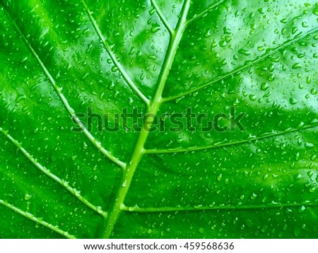 Copy space of nature green leaf texture abstract background.