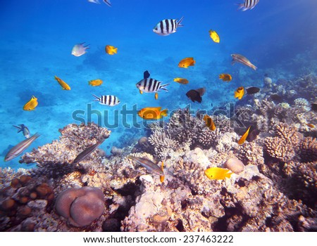 Coral and fish in the Red Sea - Egypt - stock photo