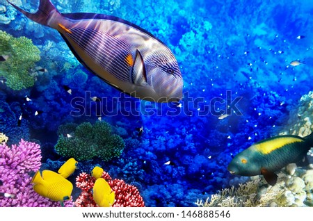 Coral and fish in the Red Sea. Egypt, Africa - stock photo