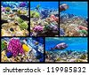 Coral and fish in the Red Sea. Egypt, Africa. Collage. - stock photo
