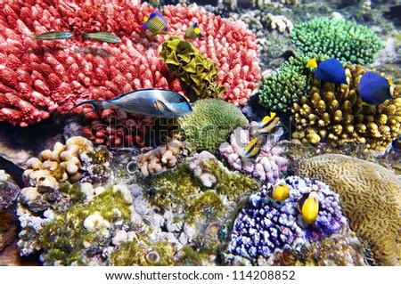 Coral and fish in the Red Sea.Fish couples.Egypt - stock photo