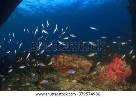 Coral and fish underwater