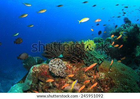 Coral and fish underwater in ocean - stock photo