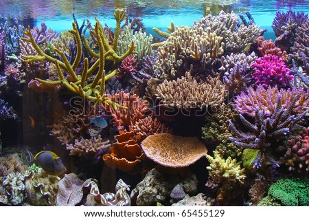 coral aquarium fish - stock photo