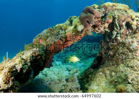 Coral Arch with French Grunt in the middle. Picture taken in south east Florida. - stock photo