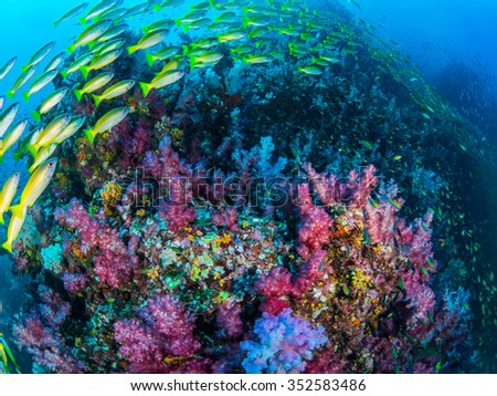Coral Colorful - stock photo