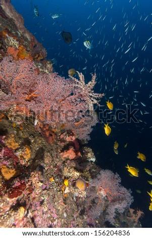 Coral dibersity and tropical fish living on liberty wreck in tulamben in bali - stock photo