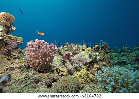 Coral, fish and ocean taken in the Red Sea. - stock photo