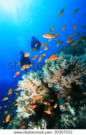 Coral,fish and scuba divers - stock photo