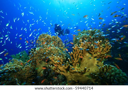Coral, Fish and Scuba Divers