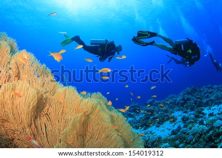Coral, fish and scuba divers underwater - stock photo