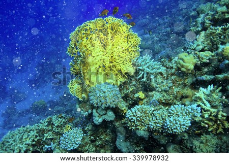 coral fish underwater background - stock photo