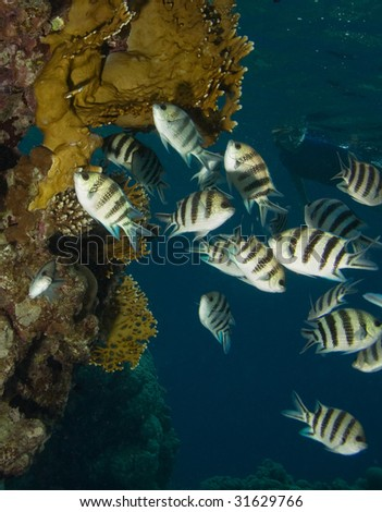 Coral, fishes and snorkeling women - stock photo