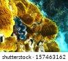 Coral formations in Queensland Ocean - Australian Coral Reef. - stock