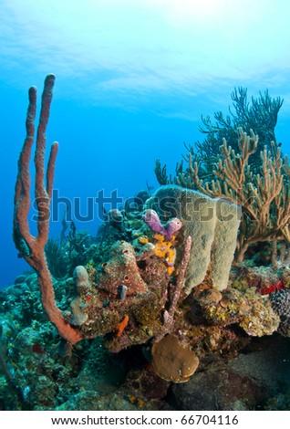 Coral gardens off the coast of Roatan Honduras - stock photo