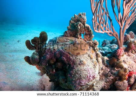 Coral head with christmas tree worms and gorgonians. - stock photo