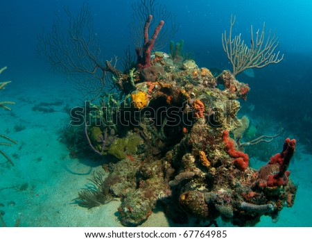 Coral Outcropping isolated in the sand from main reef, picture taken in south east Florida. - stock photo