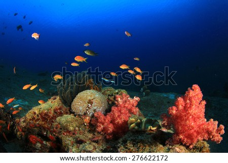 Coral reef and fish underwater - stock photo