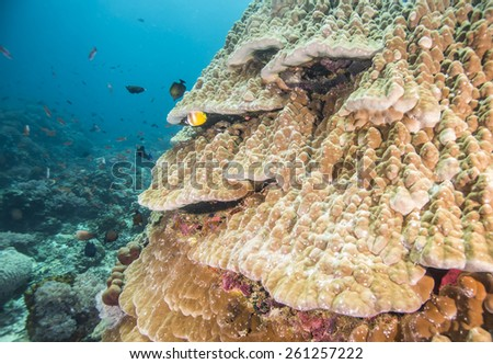 Coral reef and fishes at the colorful tropical sea.