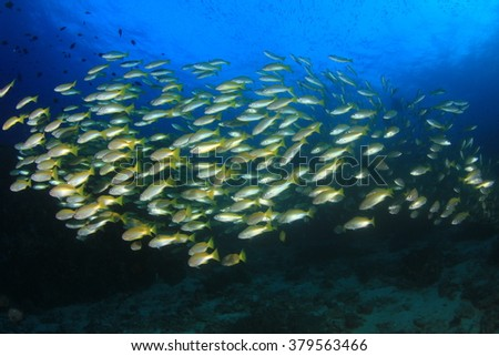 Coral reef and snappers fish