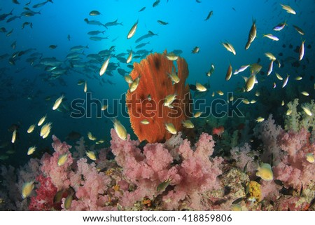 Coral reef and tropical fish in ocean - stock photo