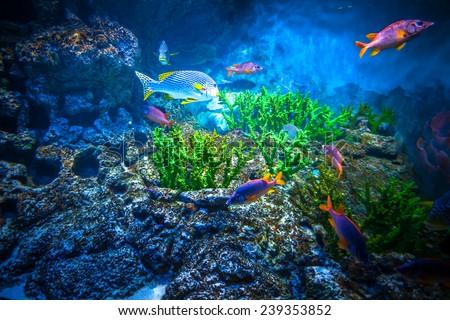 Coral Reef and Tropical Fish in Sunlight. Singapore aquarium - stock photo