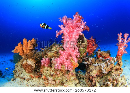 Coral Reef and Tropical fish underwater in ocean - stock photo