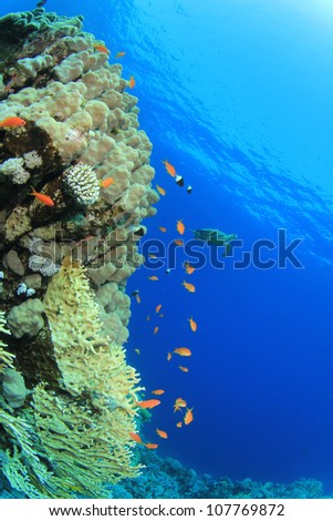 Coral Reef and Tropical Fish with turtle in background - stock photo