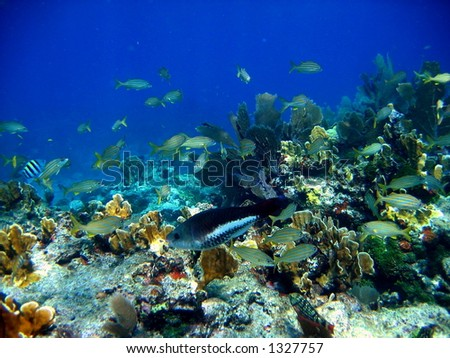 Coral reef and various fish - stock photo