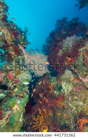 Coral reef at USAT Liberty Wreck - stock photo